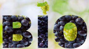L'alimentation bio, nouvelle source de profit pour la grande distribution?