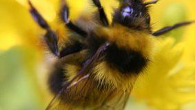 Des ruches en ville : une fausse bonne idée ?