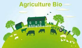 Faut-il s'inquiéter pour l'agriculture biologique ?