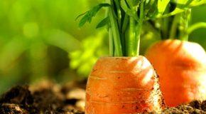 Les semences paysannes enfin autorisées à la vente aux jardiniers amateurs